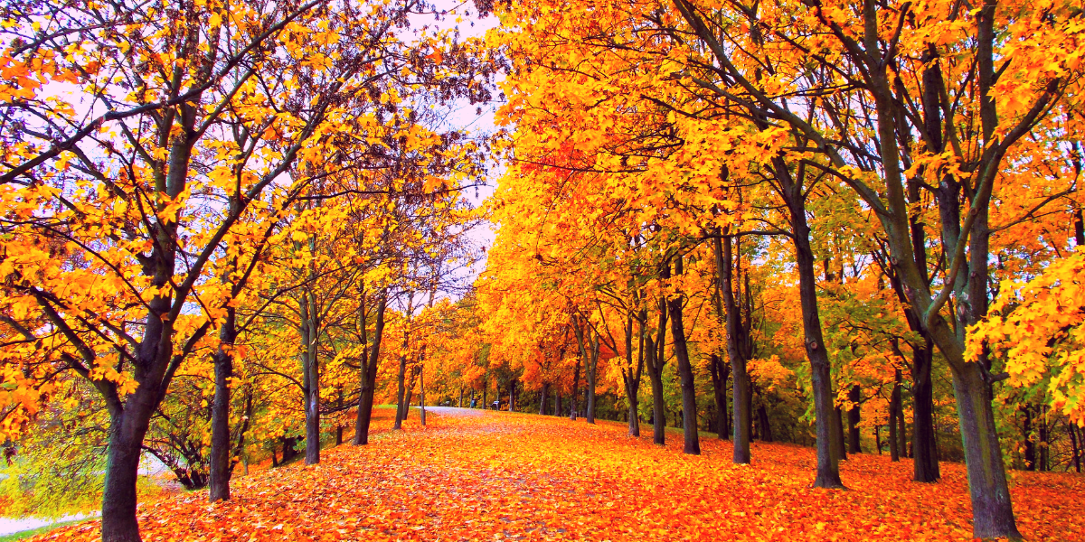 Bij het vallen van de bladeren